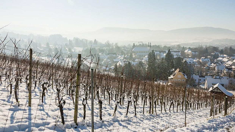 Les Vins de sports d'hiver : la fondue savoyarde